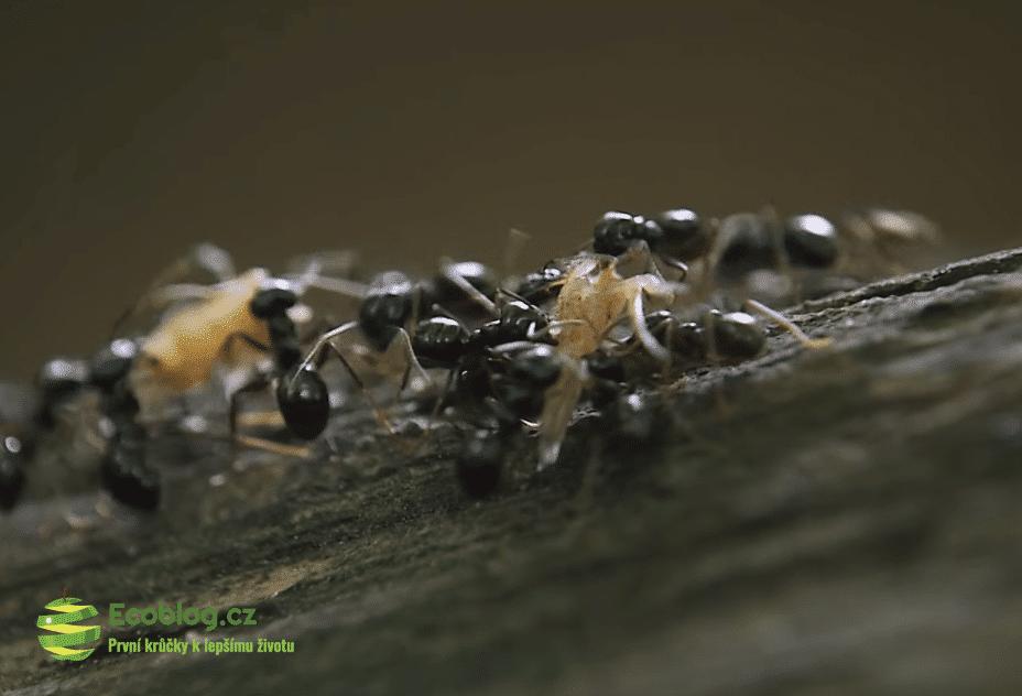 mravenci a půda