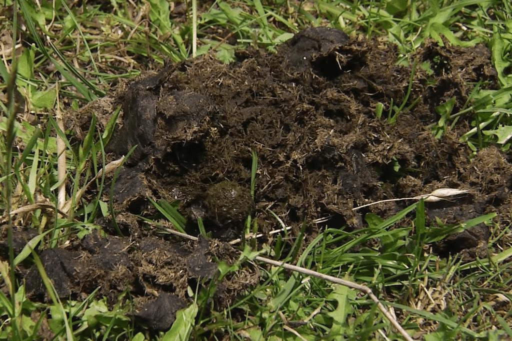 Geoderma a trus