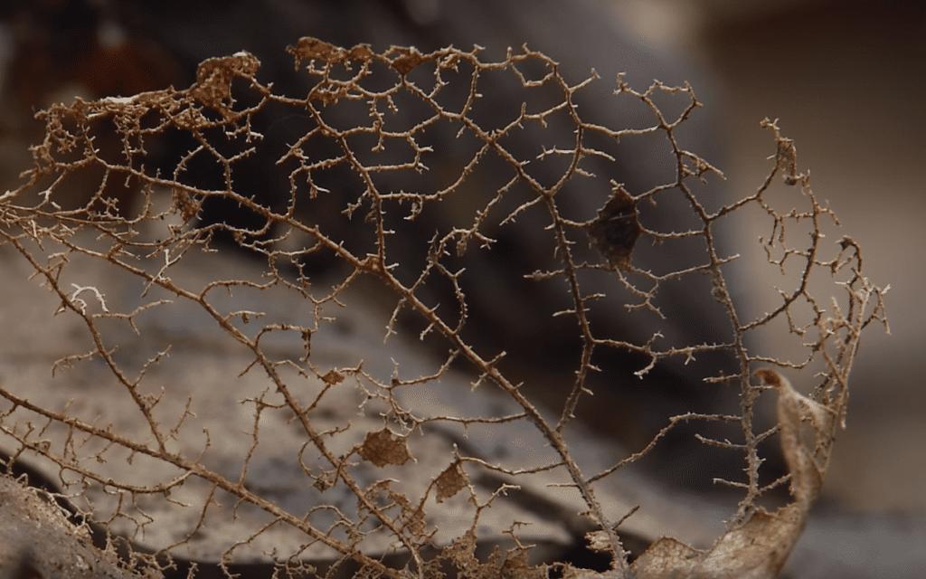listy a půda