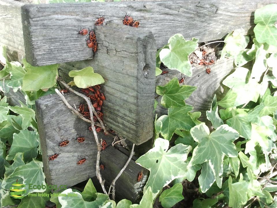 Pravidla kvalitního kompostování