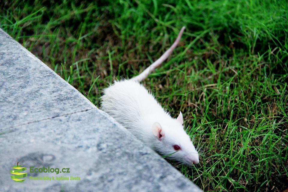 Jsou pokusy na zvířatech opravdu nutné?