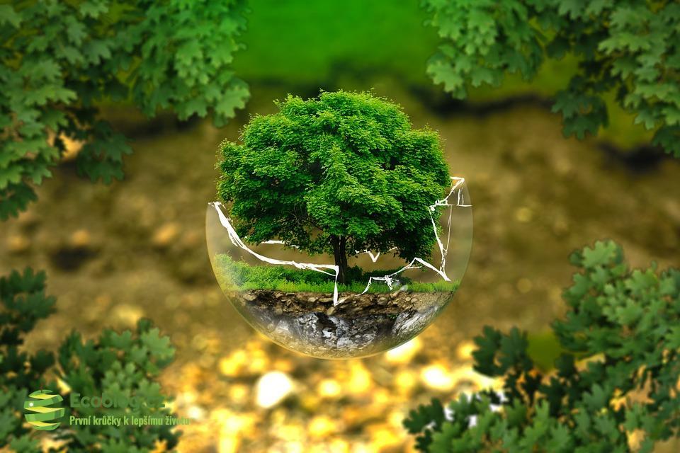 Trápí vás, že vaše okolí nežije ekologicky? Pár rad, jak zahnat chmury