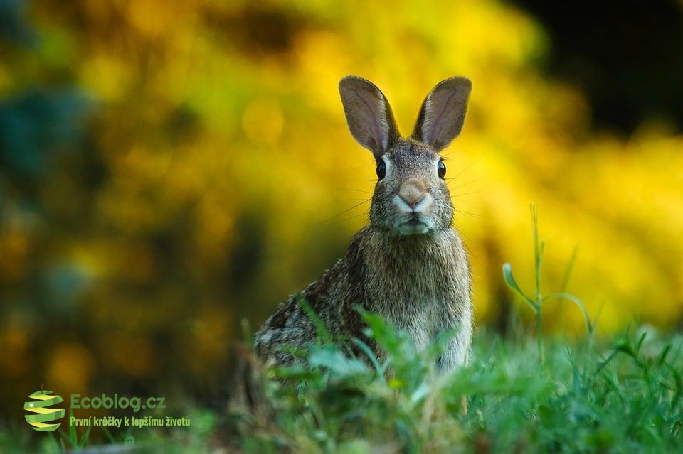 Testování kosmetiky na zvířatech v EU se neděje