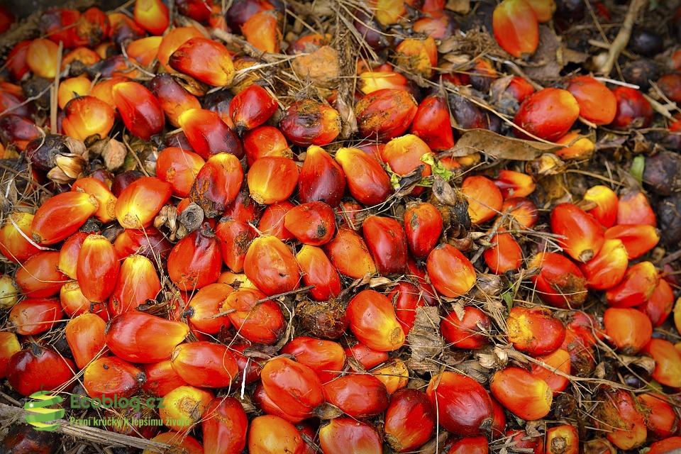 Palmový olej a účinky na zdraví